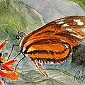 Tiger Longwing by Peggy King