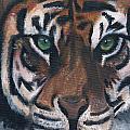 Tiger by Luke Harrington