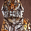 Tiger Majesty Typography Art by Georgeta Blanaru