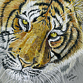Tiger Painting by Michelle Wrighton