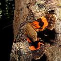 Tiger Moth Flight by Joshua Bales
