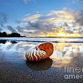 Tiger Nautilus Sunrise by Sean Davey