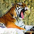 Tiger by Oleg Zavarzin