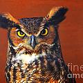 Tiger Owl by Rodney Campbell