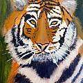 Tiger by Pamela  Meredith