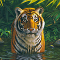 Tiger Pool by MGL Studio - Chris Hiett