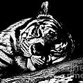 Tiger R And R Black And White by Douglas Barnard