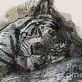Tiger R And R by Douglas Barnard