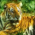 Tiger Resting Photo Art 02 by Thomas Woolworth