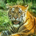 Tiger Resting Photo Art 05 by Thomas Woolworth