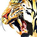 Tiger Roar by Sassan Filsoof