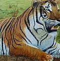 Tiger Tiger by Alicia Fowler