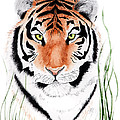 Tiger Tiger Where by Joette Snyder