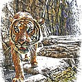Tiger View by Alice Gipson
