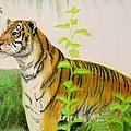 Tiger by Zina Stromberg