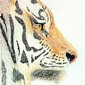 Tiger's Head by Stephanie Grant