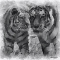 Tigers Photo Art 01 by Thomas Woolworth