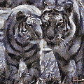 Tigers Photo Art 02 by Thomas Woolworth