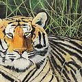 Tigress by Jeanne Fischer