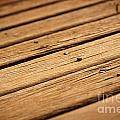 Timber Decking by Tim Hester