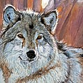 Timber Wolf by David Lloyd Glover