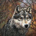 Timber Wolf by Donna  Hillman Walsh