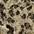 Time Holes - Sepia Tone - Wonderwood Collection - Olympic Peninsula Wa by Craig Dykstra