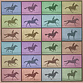 Time Lapse Motion Study Horse Color by Tony Rubino