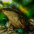 Time Spent With The Frog by Bob Orsillo