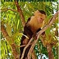 Time To Monkey Around by Gloria Manna