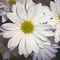 Timeless Sunshine Daisy by Patty Boban Lipinski