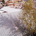 Tin Roof by David S Reynolds