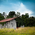 Tin Roof...ivy Covered Barn by Shane Holsclaw