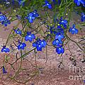 Tiny Blue Flowers by Carol Lynch