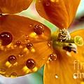 Tiny Dew Drop On Wild Flower Macro by Peggy Franz