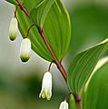 Tiny Flowers by Karen Adams