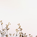 Tiny Flowers by Margie Hurwich