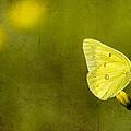 Tiny Green Dancer by Bill Tiepelman