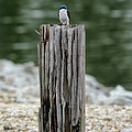 Tiny Guardian by Jai Johnson