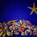 Tiny Sea Shells by Robert Storost