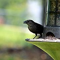 Tiny Seed For A Tiny Bird by Maria Urso