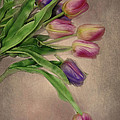 Tip Toe Thru The Tulips by Mary Timman
