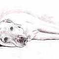 Tired Labrador by Nicole Zeug
