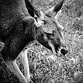 Tired Old Kangaroo by LeeAnn McLaneGoetz McLaneGoetzStudioLLCcom