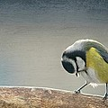 tit by Heike Hultsch