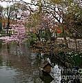 Tivoli Lake In Spring by Susanne Baumann