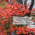 To Everything There Is A Season by Jill Lang