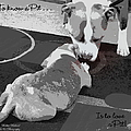 To Know A Pit Is To Love by Bobbee Rickard