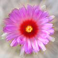To Return To Innocence. Cactus Flower by Jenny Rainbow