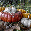 To Swell The Gourd by Richard Reeve